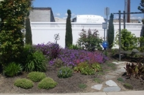 alderwood-beautiful-fauna-and-floral-colors
