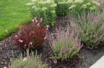 alderwood-landscaping-pleases-residents-and-their-guests