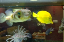 marine-life-alderwood-residents-enjoy-their-home